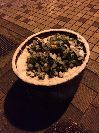 福島での初雪だったそうです